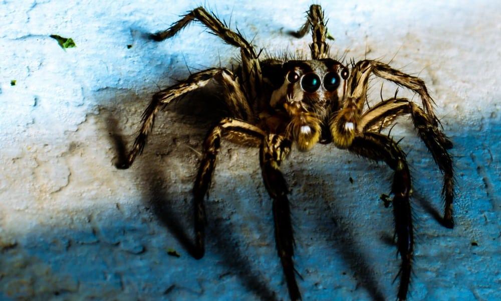 Spinne Mit Staubsauger Aufsaugen Das Passiert Wirklich Kukksi De