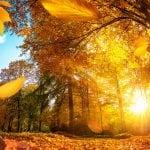 Wetter-Hammer: Bis 18 Grad im November in Deutschland!