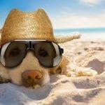40 Grad! Deutschland kollabiert vor der Hitze