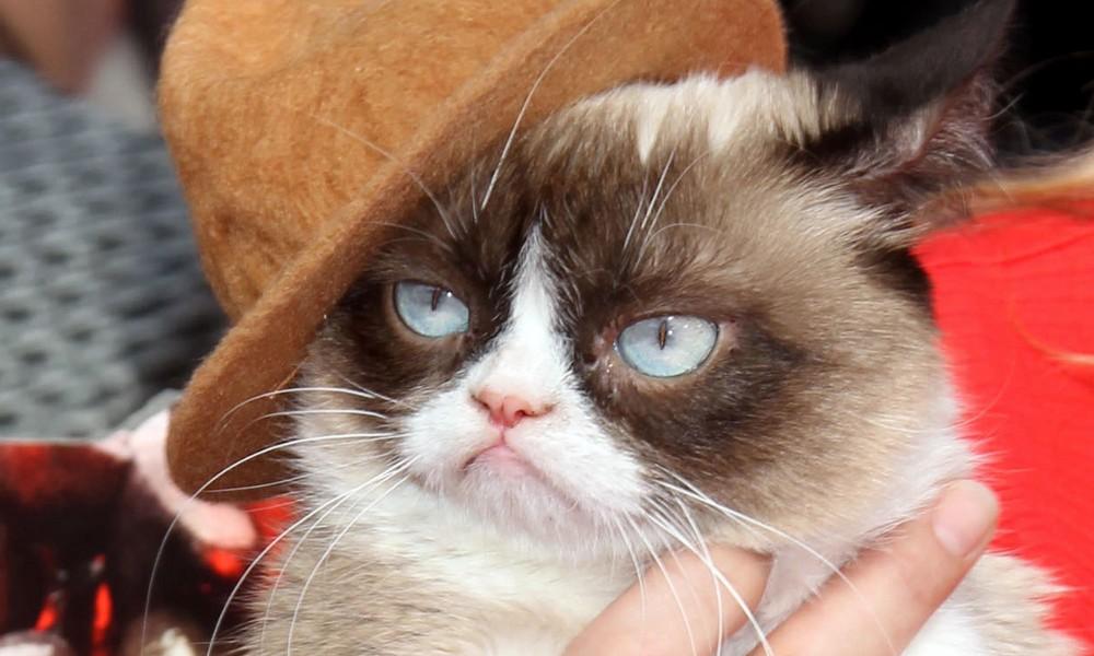 Mit sieben Jahren: Grumpy Cat ist tot!