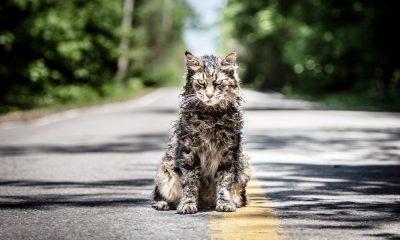 """Katze Leo aus """"Friedhof der Kuscheltiere"""""""