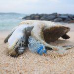 Bis zum Jahr 2050: Bald mehr Plastik als Fische im Meer!