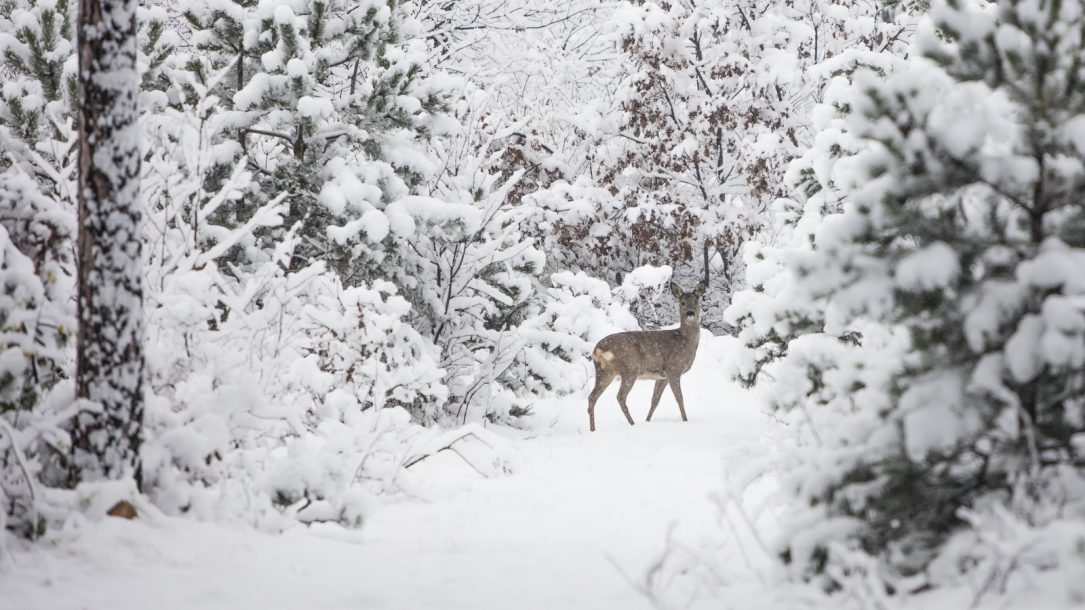 Kälte-Schock: Kommt der erste Wintereinbruch?