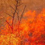 Buschfeuer in Australien: Fällt das Dschungelcamp aus?