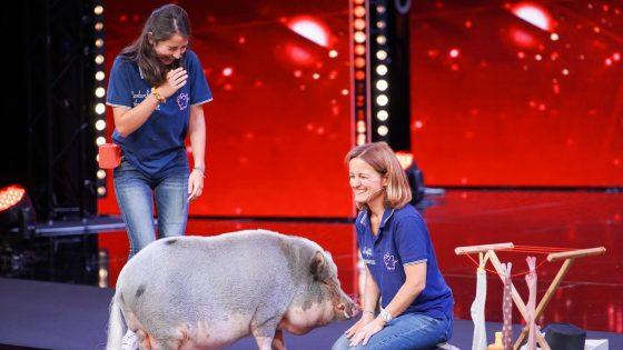 Henriette, Schwein