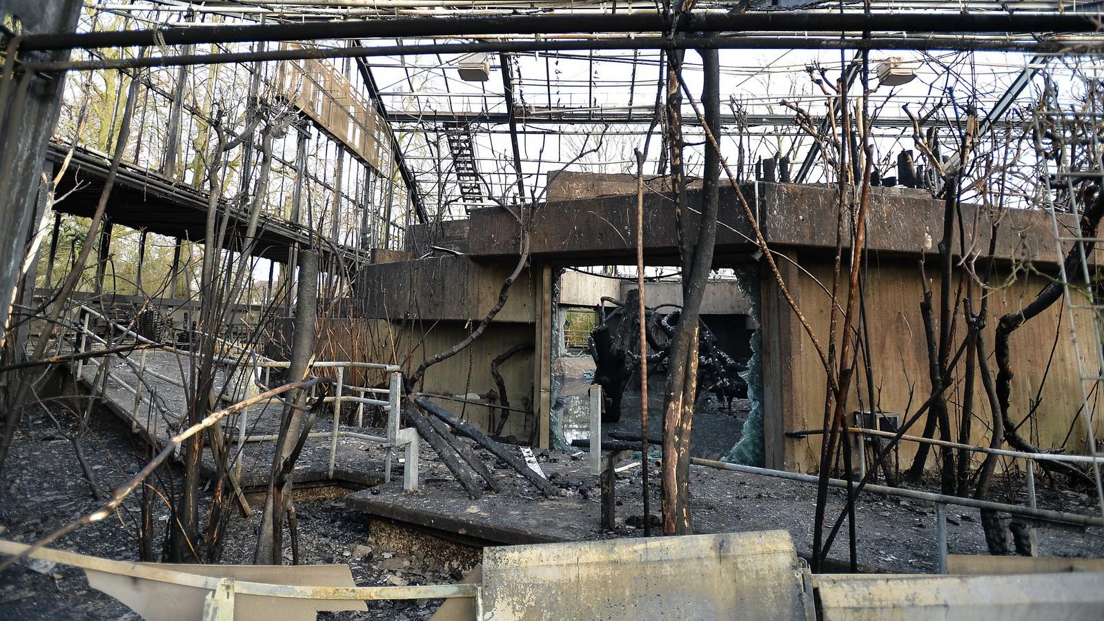 Feuer-Inferno im Krefelder Zoo