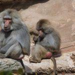 Feuer-Inferno im Krefelder Zoo: Flammen töten alle Tiere im Affenhaus!