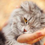 Darum solltest du deine Katze nicht umarmen