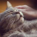 7 Anzeichen, dass deine Katze Schmerzen hat
