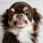 7 Anzeichen, dass dein Hund sauer auf dich ist
