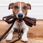 5 wichtige Regeln bei der Erziehung deines Hundes