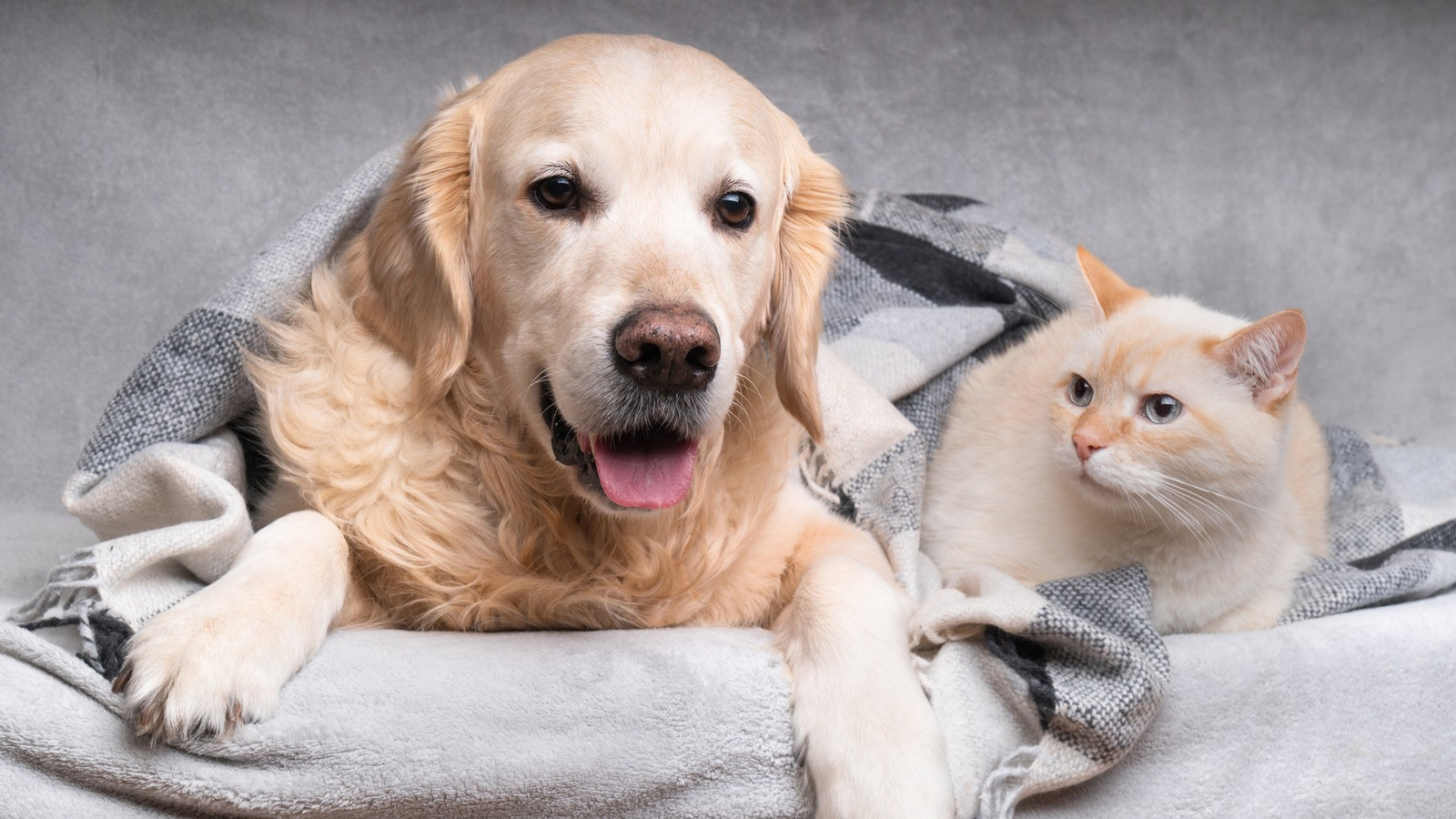 Können Sich Katzen Beim Menschen Anstecken