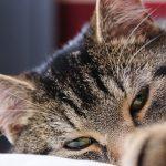 Darum zeigt dir deine Katze oft den Hintern