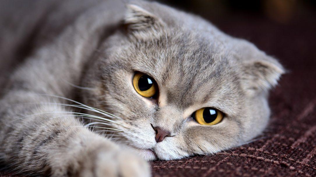 Was bedeutet Schluckauf bei meiner Katze?