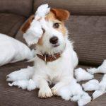 7 Dinge, die du vor dem Hundekauf wissen musst