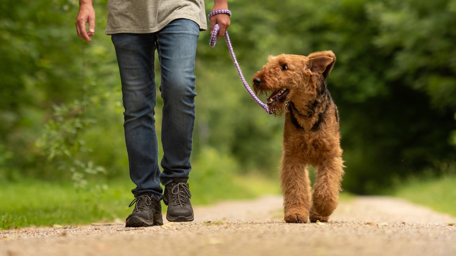 Hund beim Gassi gehen