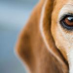 Diese 5 Dinge solltest du nie mit deinem Hund machen