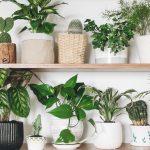 Welche Pflanze passt eigentlich am besten zu mir?