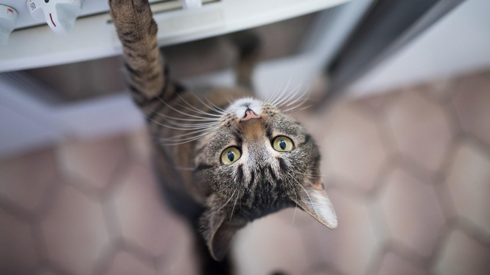 So pflegst du das Fell deiner Katze richtig