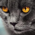 Darum haben Katzen senkrechte Pupillen!