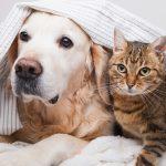 Darum mögen sich Hunde und Katzen nicht!