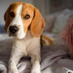 10 Dinge, die dein Hund absolut nicht mag