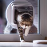 Coronavirus: Darf ich meine Katze noch raus lassen?