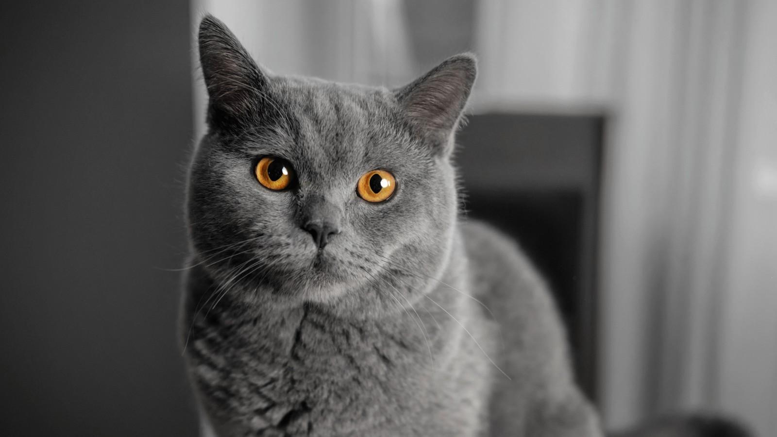 Kann dich deine Katze gar nicht leiden?