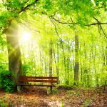 Wieviele Bäume braucht man, um ein Buch herzustellen?