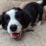5 Gründe: Darum bellen Hunde wirklich!
