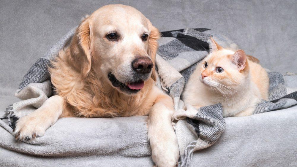 hund oder katze welches tier ist schlauer  kukksi