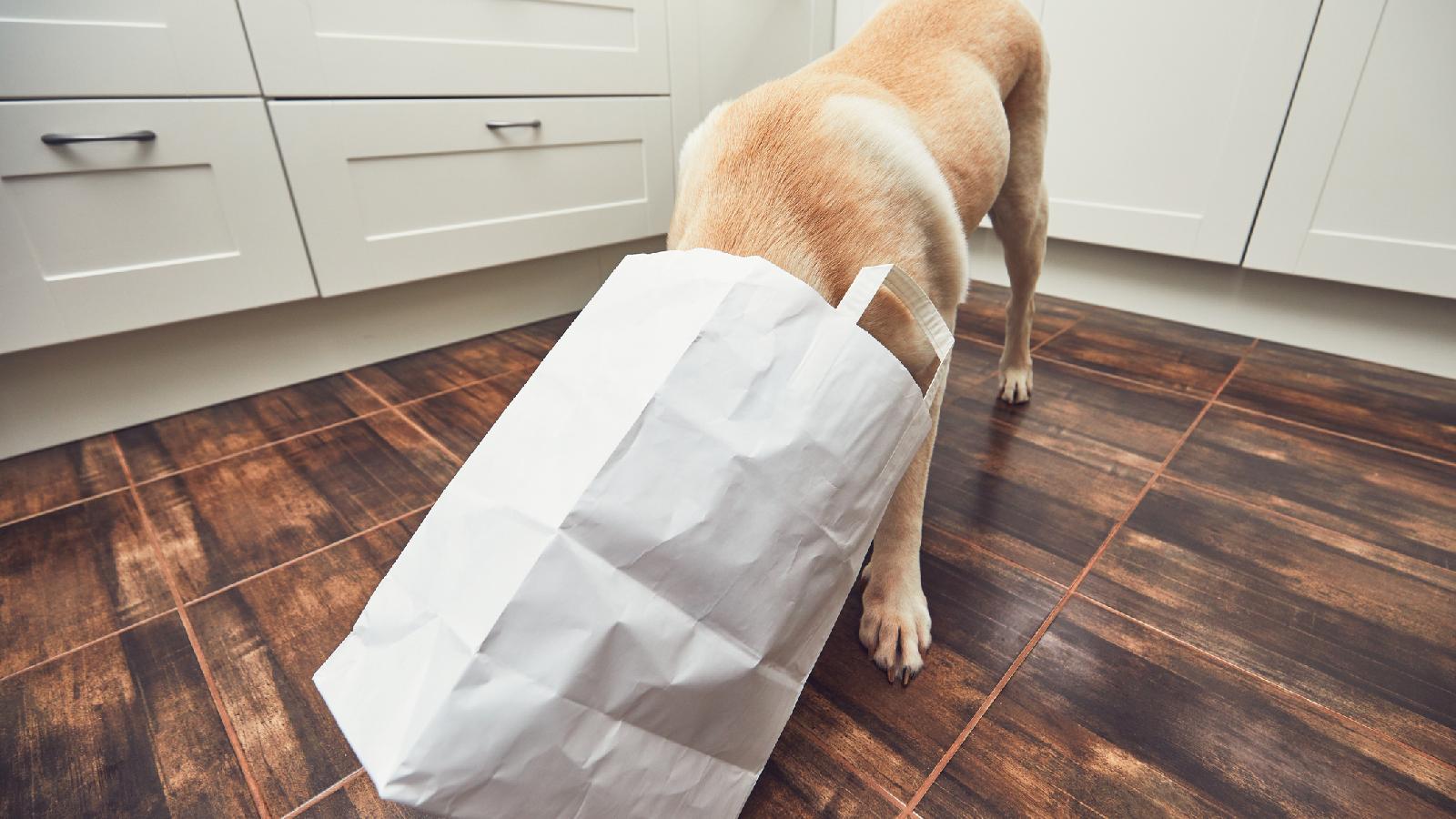 Erstickungsgefahr für Haustier