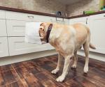 Darum können Tüten für dein Haustier tödlich sein
