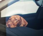 Haustiere: Diese 4 Fehler solltest du im Sommer vermeiden
