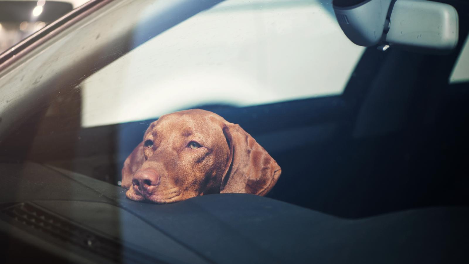 So schützt du dein Haustier vor der Sommerhitze!