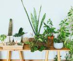 Diese Pflanzen lassen deine Wohnung abkühlen