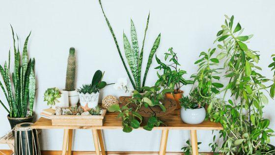Diese Pflanze passt zu dirDiese Pflanzen kühlen Wohnung