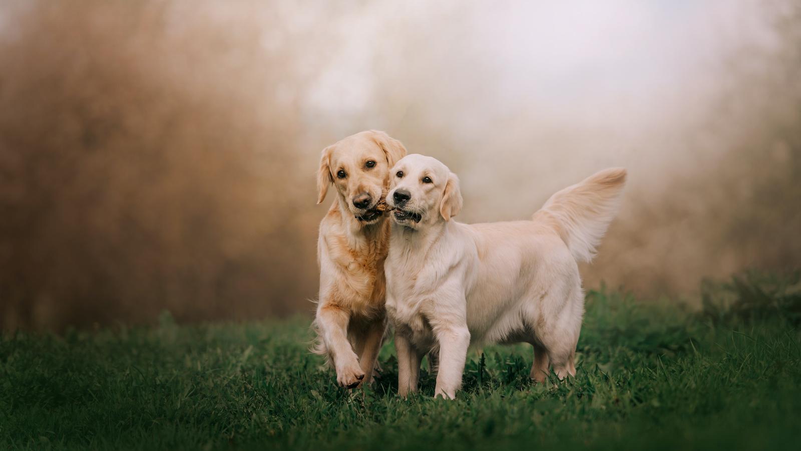 So pflegst du das Fell deines Hundes