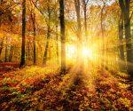 Wetter-Experte verrät: So wird der Herbst in Deutschland!