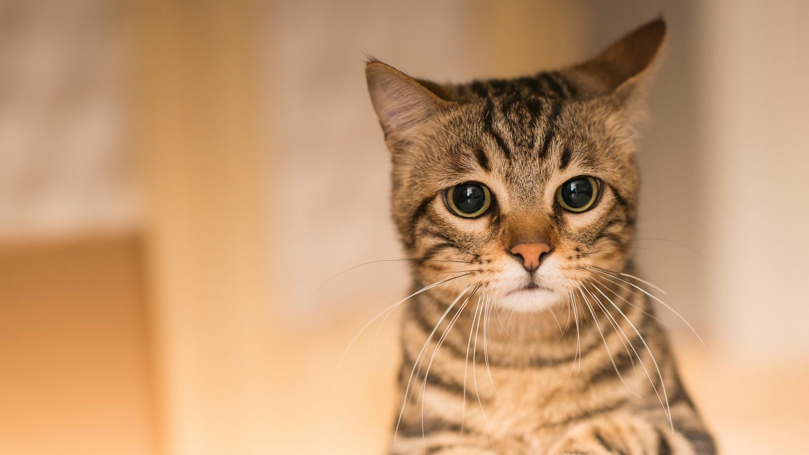 Katze Traurig Anzeichen