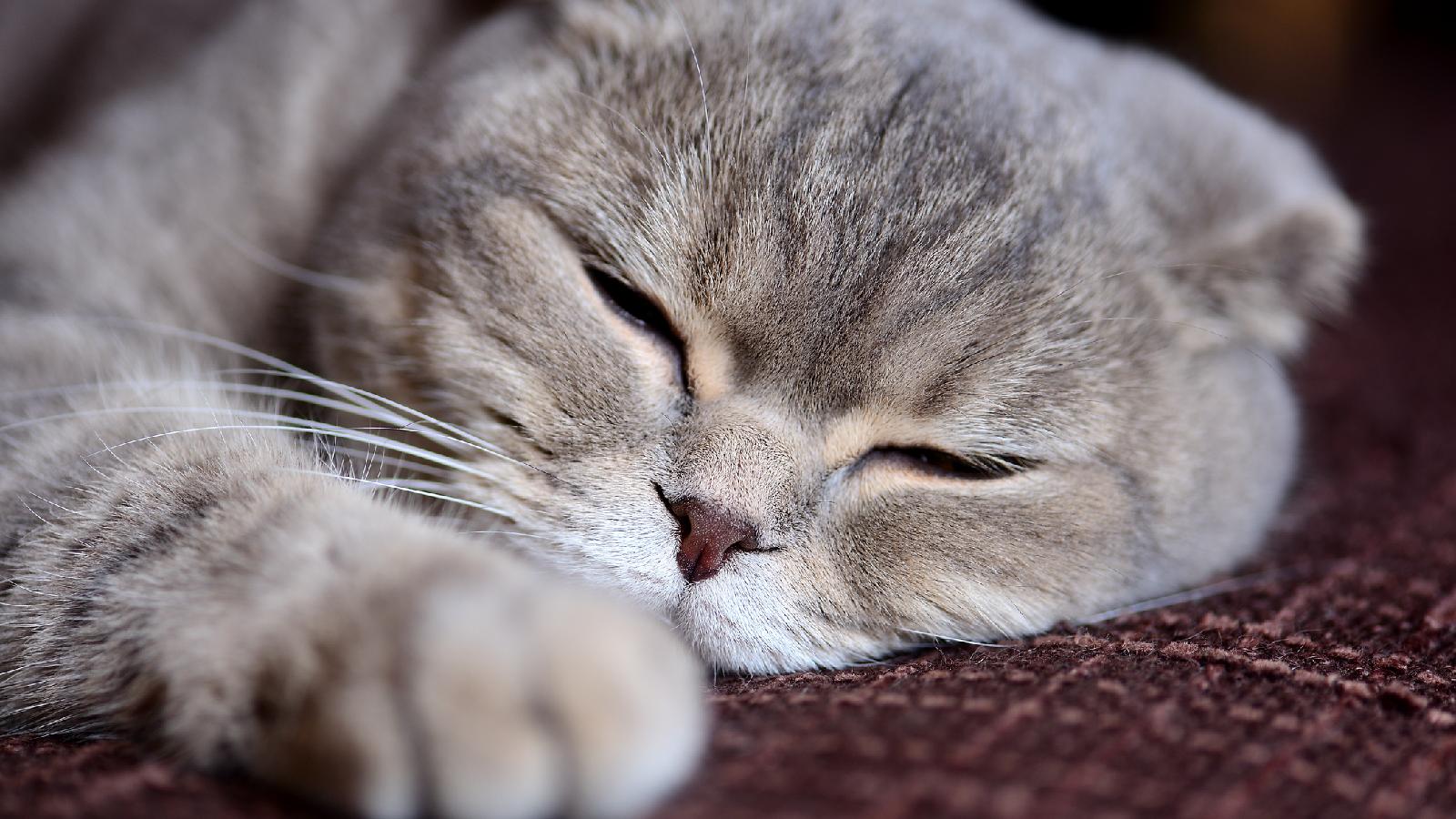 Das bedeutet Schluckauf bei deiner Katze