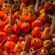 Deshalb sollte man auf Palmöl verzichten