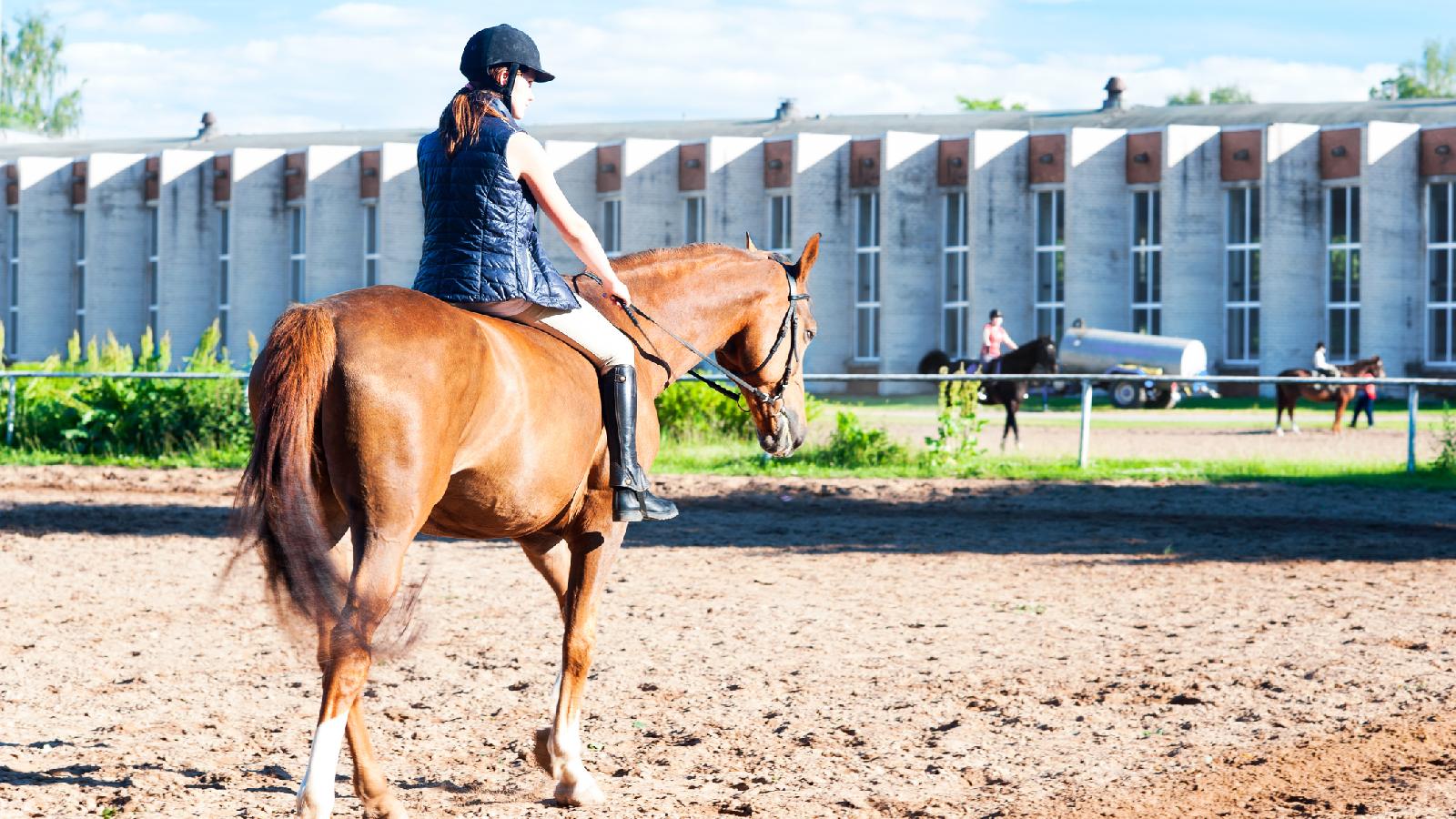 Pferd beißt Angreifer in den Arm