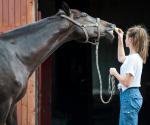 Pferd beschützt 16-Jährige und schlägt Angreifer in die Flucht
