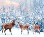 Weiße Weihnachten 2020: HIER sind die Chancen am höchsten!